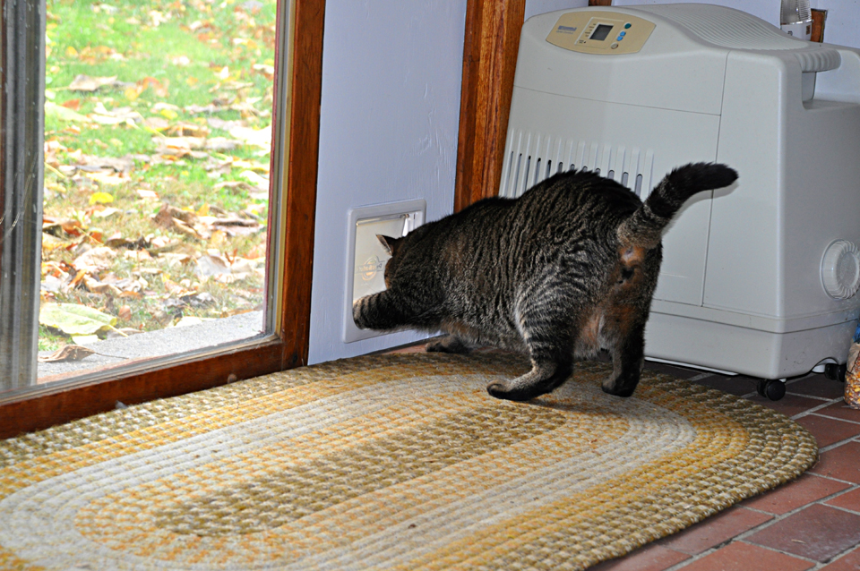 Even the wild turkeys now want in u2014 especially since I replaced the kitty door with a larger one the cats can squeeze through easier! & Chip Ford - The Kitty Door Project